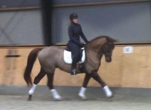 bellami_gallop
